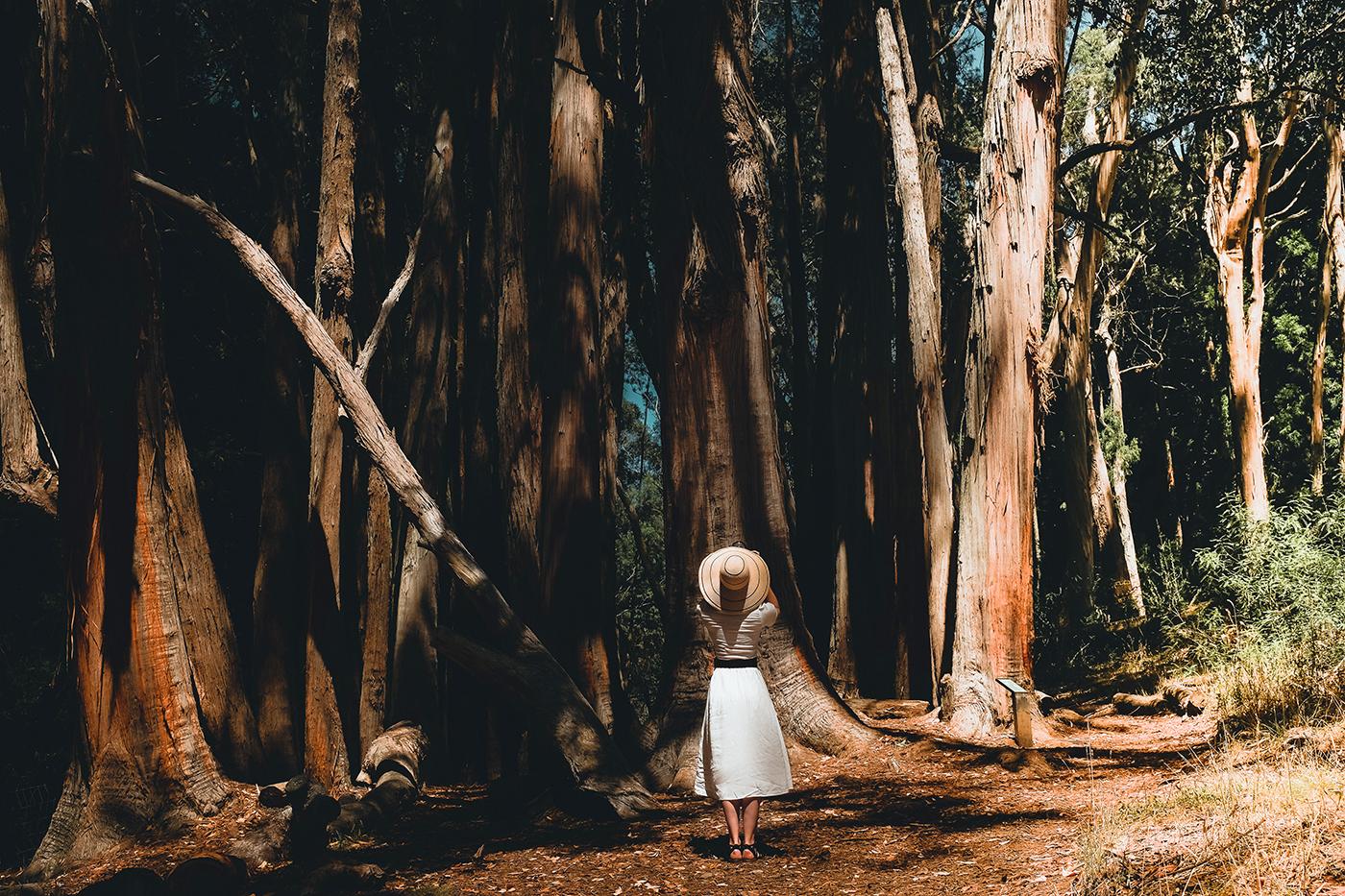 angie goes exploring honeymoon in 2½ itinerario di un mese in alaska e alle hawaii giorgia romiti maui haleakala