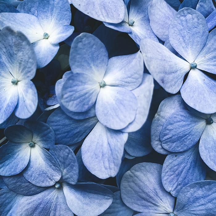 angie goes exploring honeymoon in 2½ itinerario di un mese in alaska e alle hawaii giorgia romiti maui The Enchanted Floral Gardens of Kula