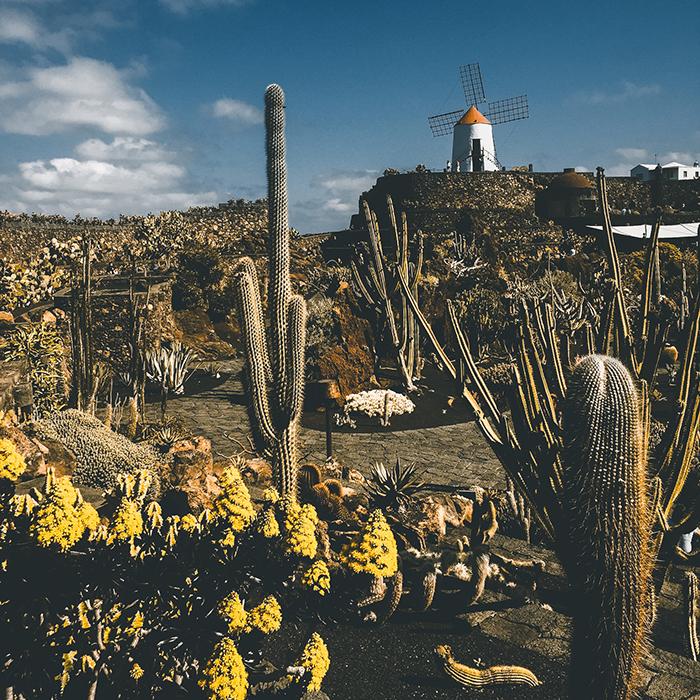 angie goes exploring viaggiare in tempo di covid alle isole canarie tra fuerteventura e lanzarote_giorgia romiti jardin de cactus